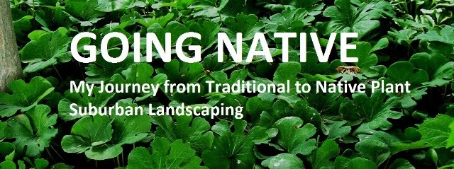 Going Native - My Journey from Traditional to Native Plant Suburban Landscaping