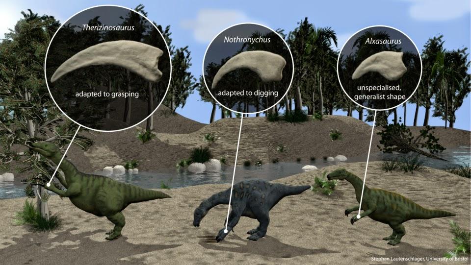 T. rex claws