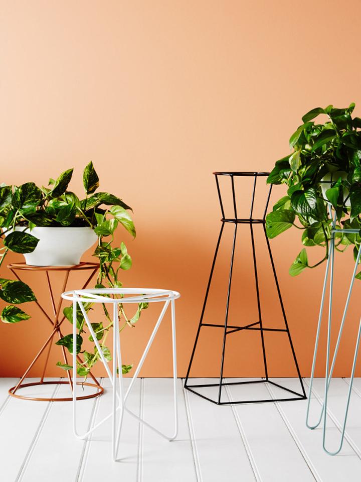 Ivy muse unos pedestales atemporales fresh wood - Pedestales para macetas ...