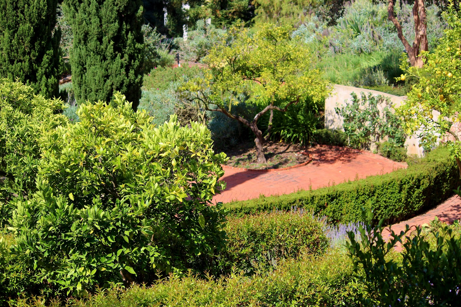 A very good life the first estate of beverly hills home for Terrace trees