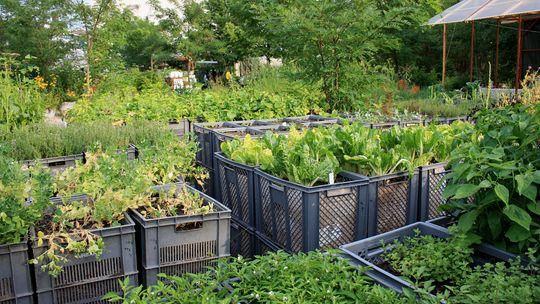 urban farming in berlin studio botaniq. Black Bedroom Furniture Sets. Home Design Ideas
