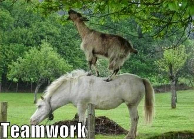 Teamwork animals