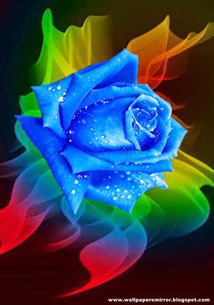 Top 20 beautiful rose wallpapers