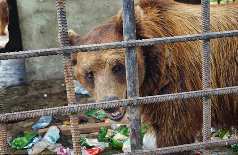 barnamedve, állatvilág, állatvédők, Milioane de Prieteni, Brassó, Románia,