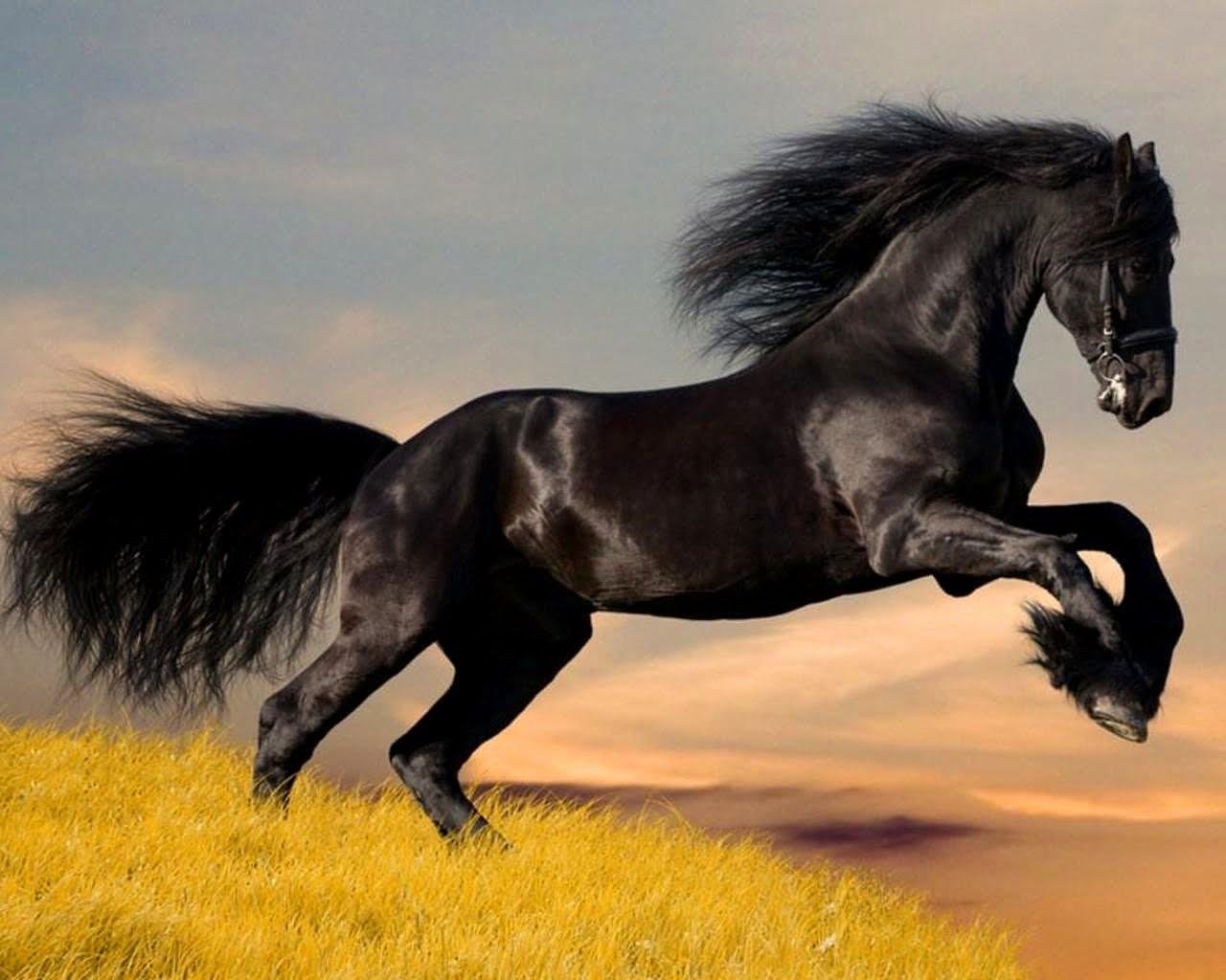 http://2.bp.blogspot.com/-uHUi7f0GORY/TYBhiZ8qzTI/AAAAAAAAAHQ/yy6OpkcwmvU/s1600/caballo_negro_wallpaper.jpg