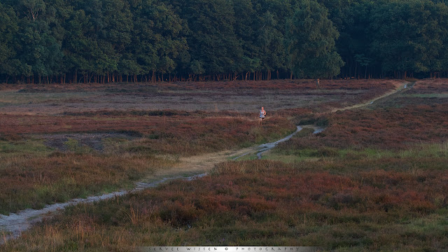 Hardlopen bij zonsondergang op de hei - Running at sunset on the heathland