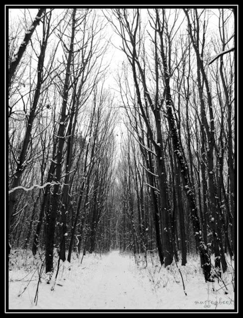 bos voor de Hinkelenberg, Tessenderlo