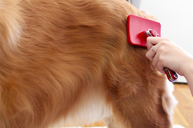 Keeping your dog's coat shiny and healthy with CHI for Dogs Self Cleaning Slicker Brush