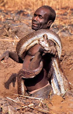 Shocking Pictures of an African Catching Python for a Living Seen On www.coolpicturegallery.us