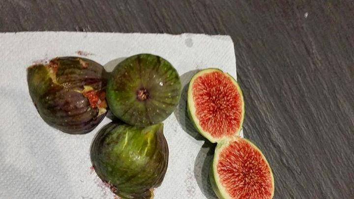 Figs : Pico Brogiotto Nero