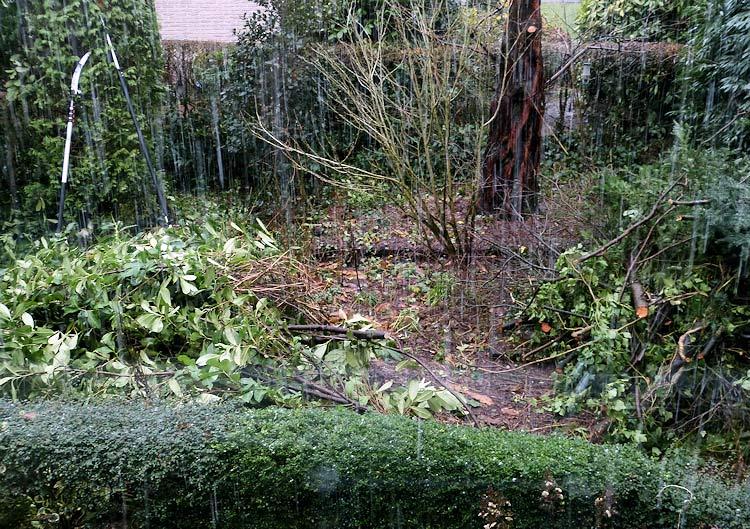 Spinrag ontreddering in de tuin snoeien for Tuin snoeien