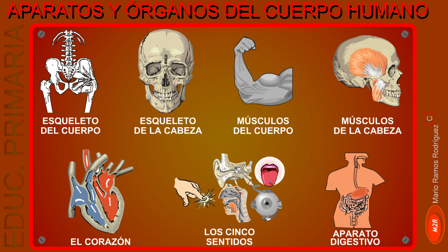 http://www.gobiernodecanarias.org/educacion/3/WebC/eltanque/cuerpohumano/chumano_p.html