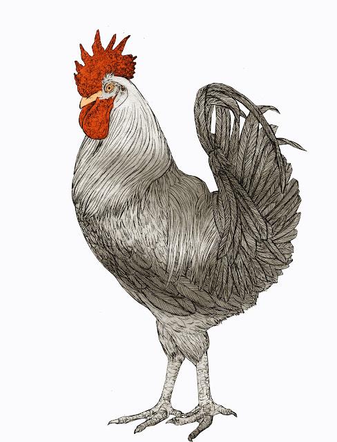 el gallo serrano