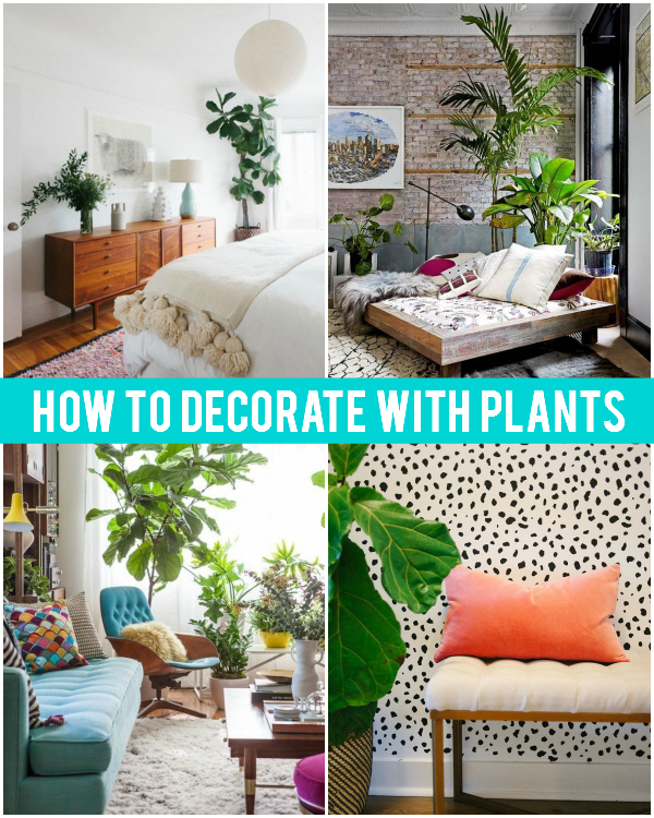 How to Decorate with Indoor Plants: Inspiration & Tips for Styling with Plants