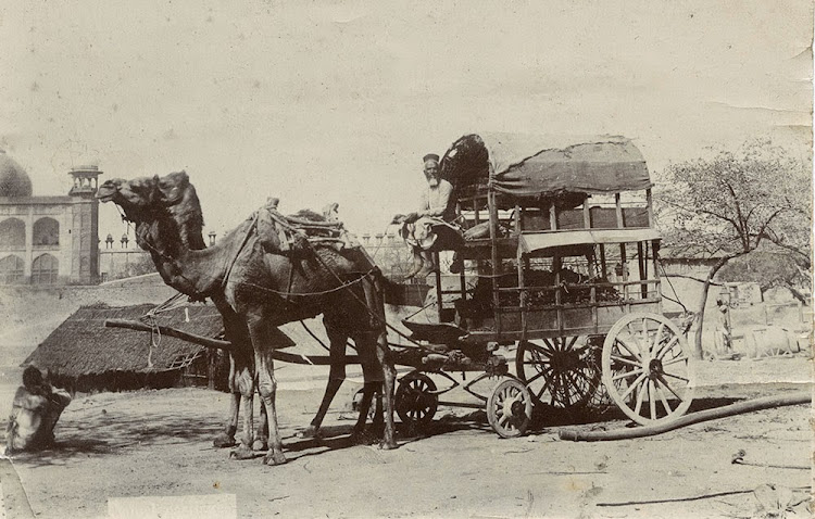 Camel Carriage - Agra c1890's