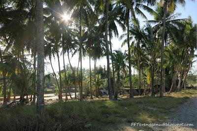 Pepohon kelapa