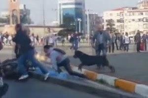 Video, Seekor Anjing Hentikan Keributan Antara Dua Orang Pengendara di Jalan Raya