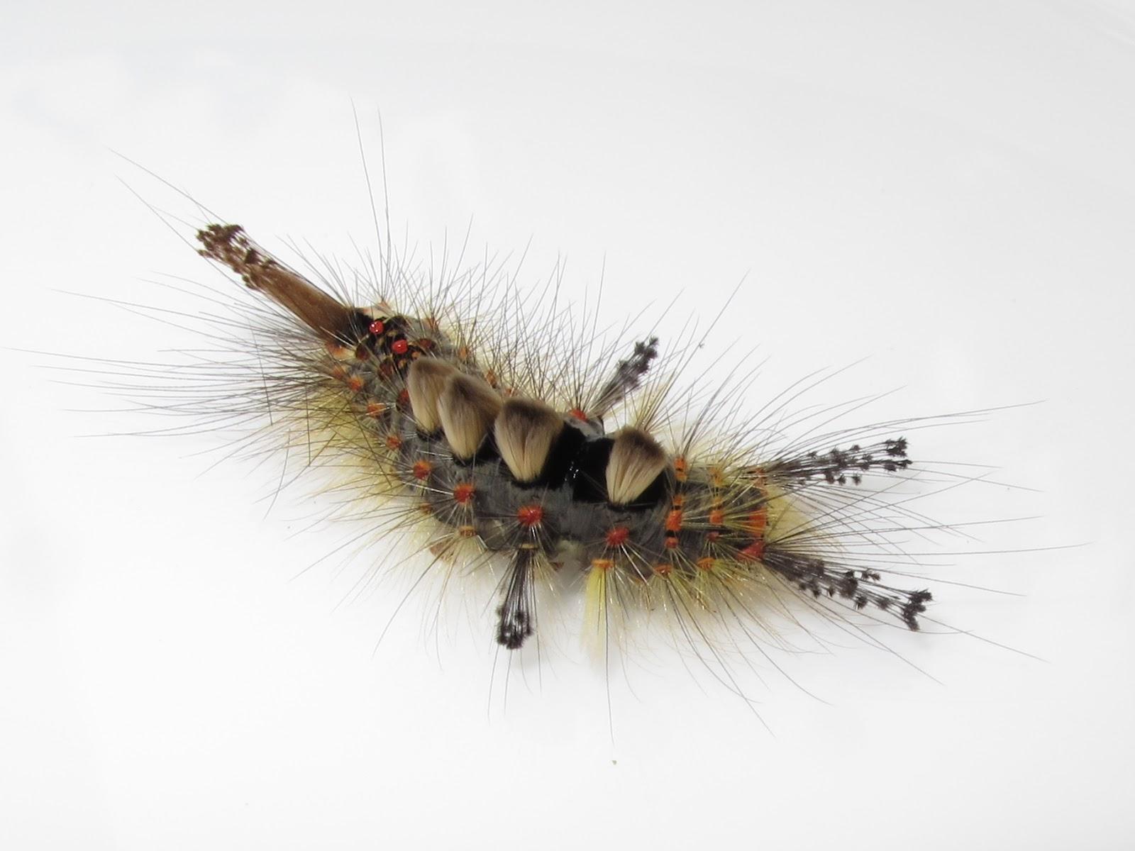 bugblog the very surreal caterpillar