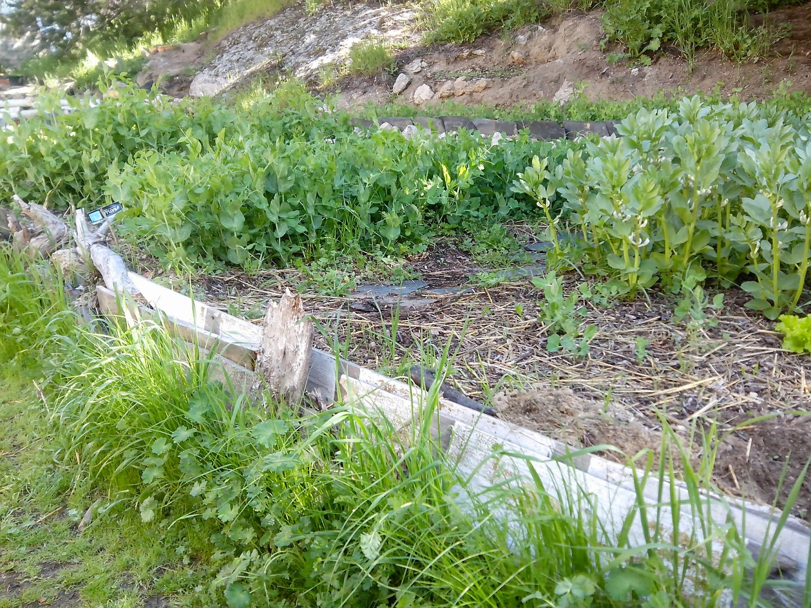 Plantas cultivadas