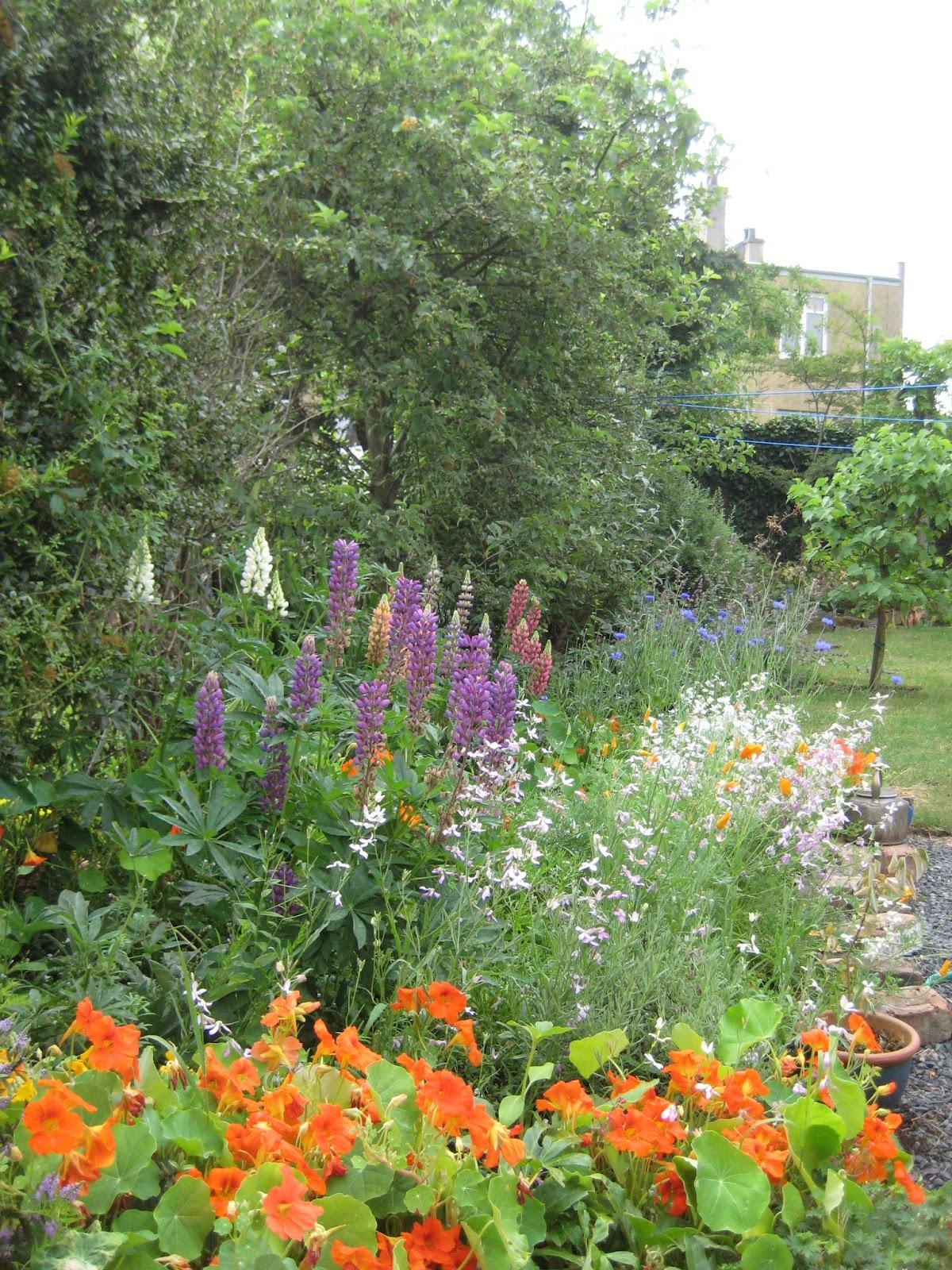 mal s edinburgh allotment cottage garden bed