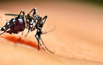 Tips Mudah Menghindari Gigitan Nyamuk