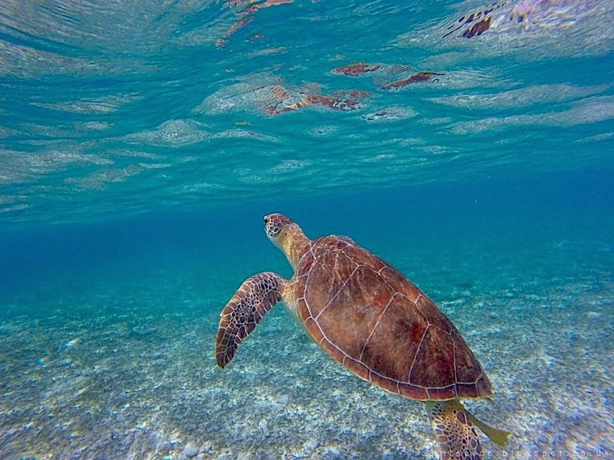 beach, Caribbean, Grand Cayman, holiday, lifestyle, travel, turtles, Spotts Beach
