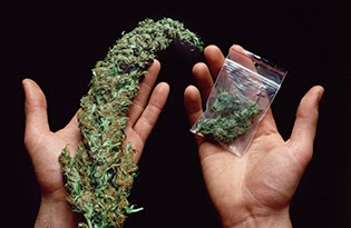 Consumo de cannabis na adolescência tem riscos elevados