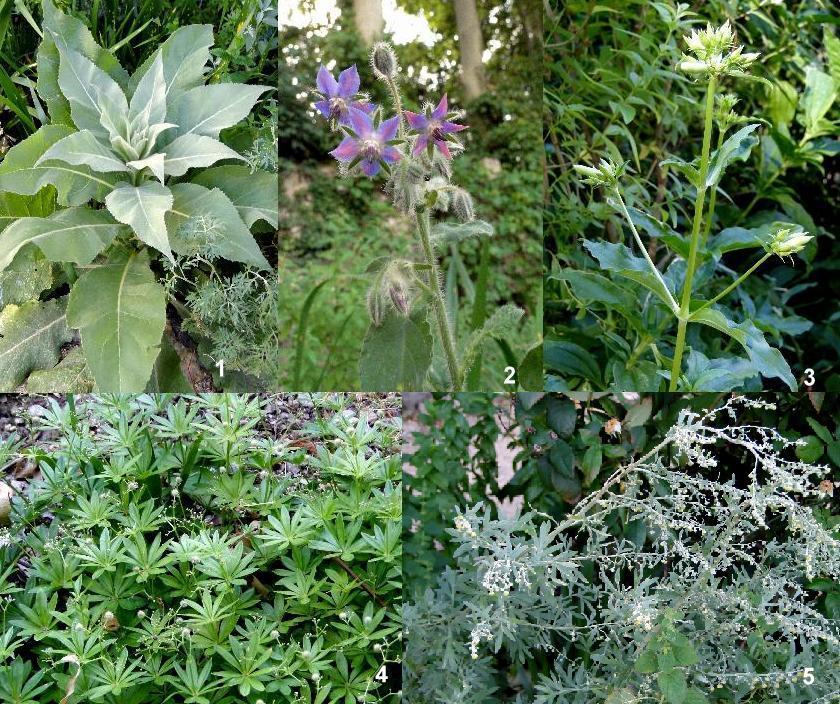 Les feuillets de fardoise le jardin m di val de valence for Entretien jardin valence