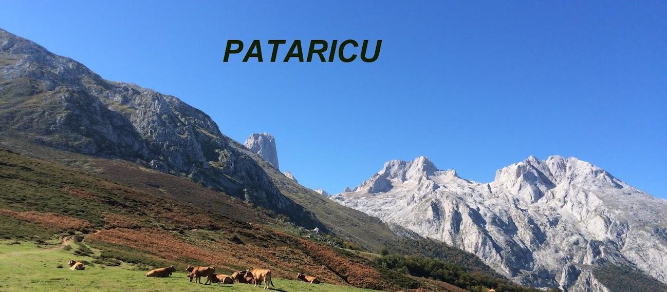 PATARICU