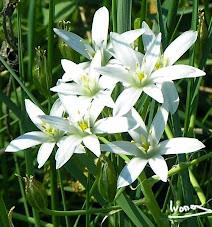 L'Orphisme, le Christianisme, les religions des petites fleurs des champs.