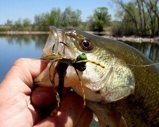 Colorado fly fishing reports introducing the booby frog for Top water bass fishing