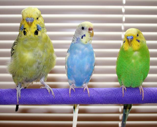 4425488530_c72397ca33_z Birds