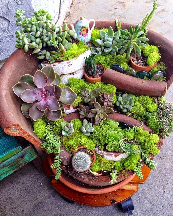 mini jardins em vaso:Mini jardins reaproveitando vasos quebrados