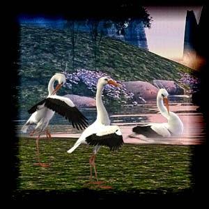 http://2.bp.blogspot.com/-uLtZ3875jH0/U3w56XMefqI/AAAAAAAACuw/9jRgAOBhO_o/s1600/Mgtcs_SeagullBirds.jpg