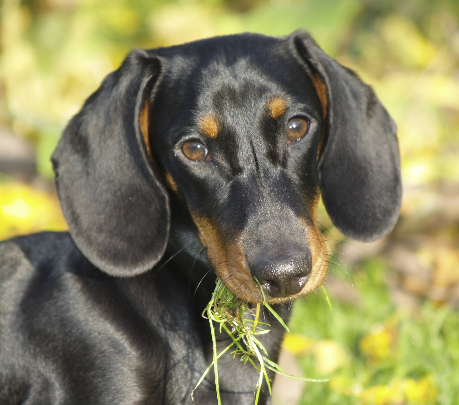 bita i gräset