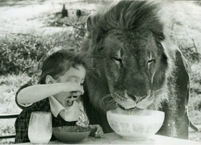 lunch with lion