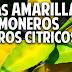 Hojas amarillas en las plantas Limoneros y Naranjos - Fertilización y Hongos