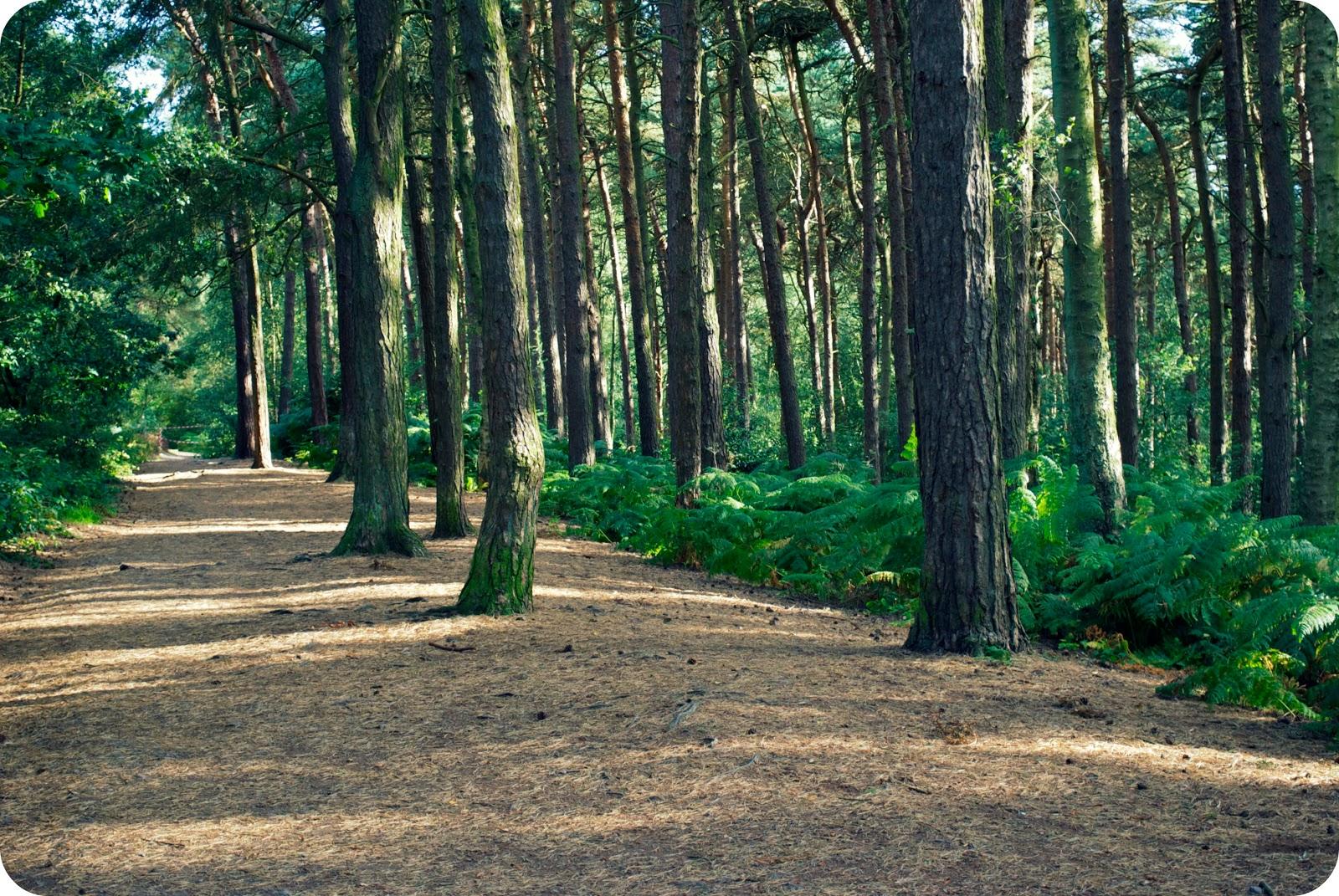 http://2.bp.blogspot.com/-uMUJQnTYWqI/TkmlVKNx3kI/AAAAAAAAB28/ytrzrdrrkIw/s1600/trees%2B3.jpg