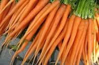 Carote ricche di betacarotene per l'abbronzatura