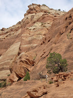 Bighorn Ram in Colorado National Monument