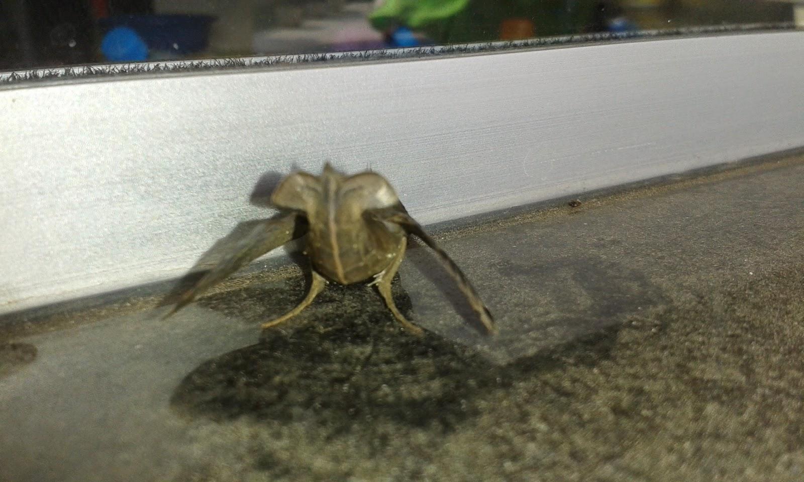 Kleine Bruine Beestjes In Huis