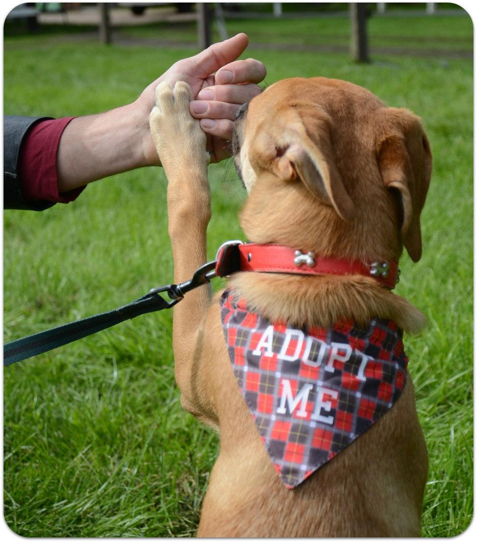 Klik op de foto voor alle honden die nog een baasje zoeken: