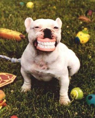 funny dog-26