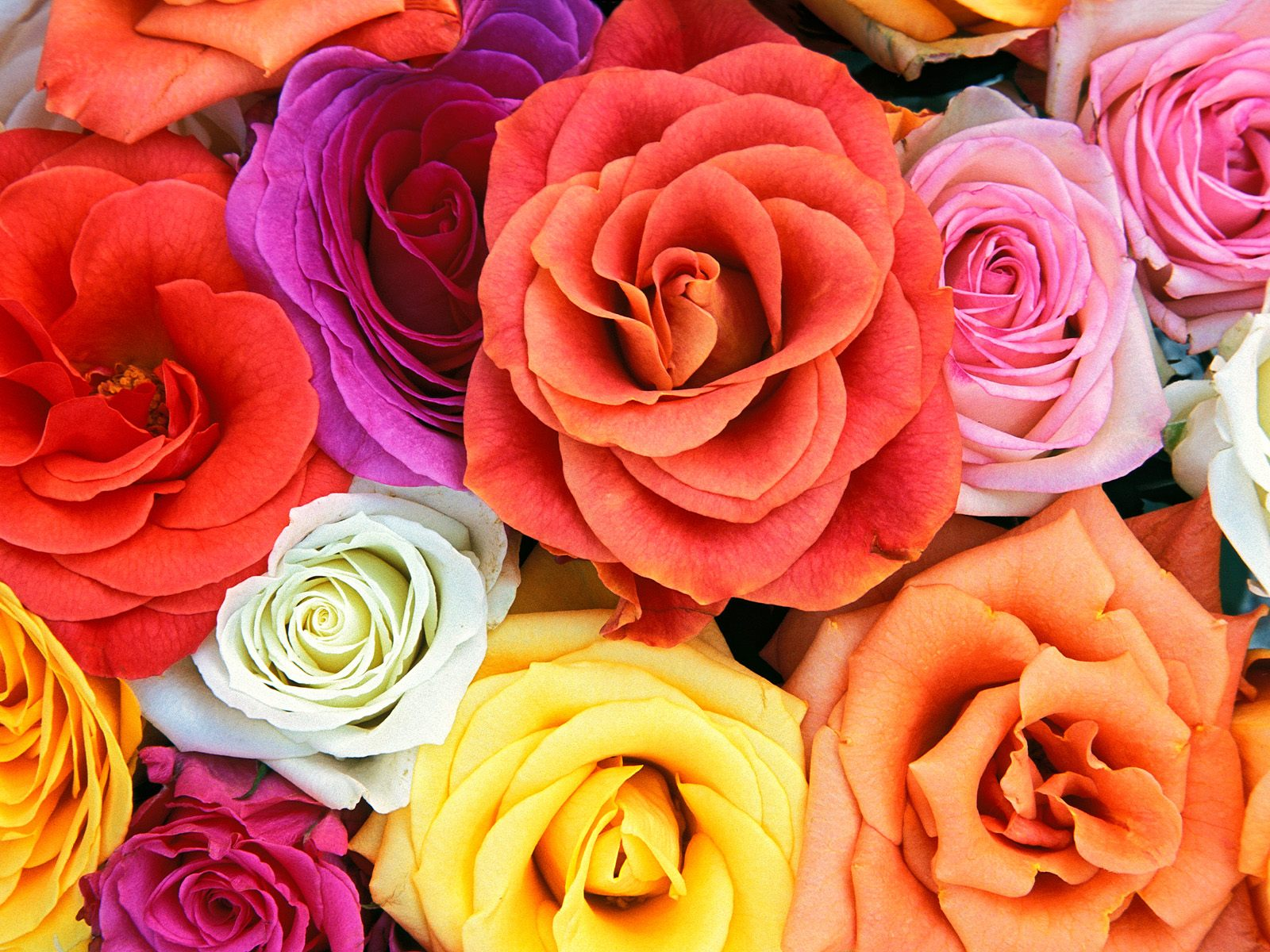 wallpaper flores de colores