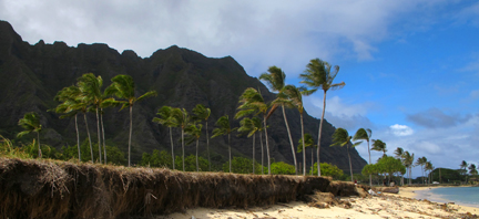 Beach in Oahu with palms and mountains in background