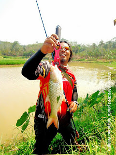 Ikan hampala primadona pemancing