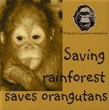SAVE ORANG UTAN  !!!!!!!!
