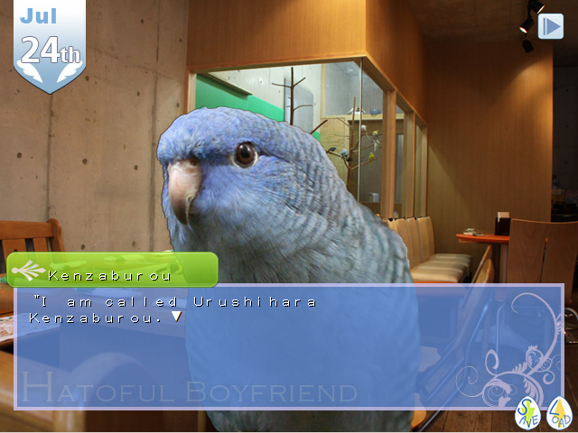 Kenzaburou, the gentlemanly parakeet