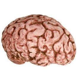 Brain Costume4