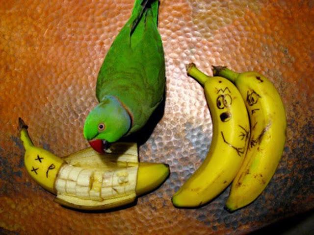 ابداعية colorful-parrots-26-